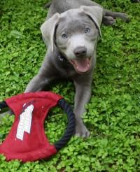 Frisbee chew 1 (best)